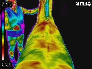 Thermografie paard